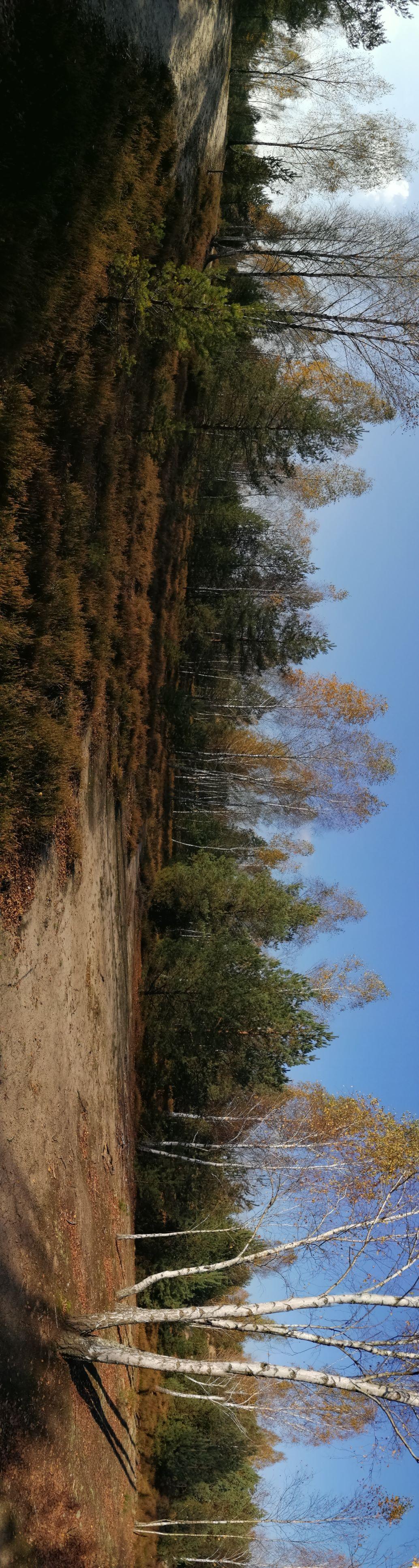 Panorama 4MP
