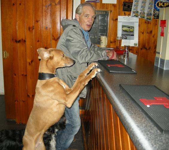 Pies w pubie mniejszy 500