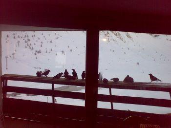 Ptaki 350